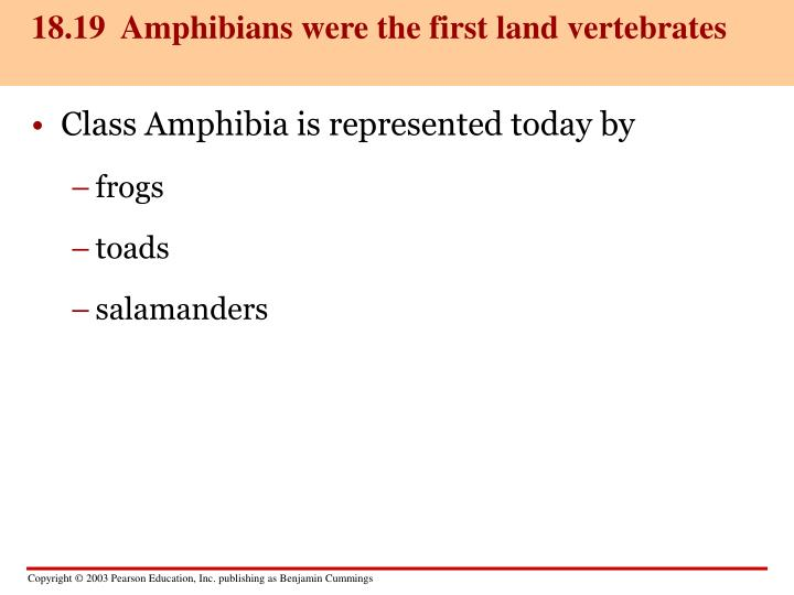 18.19  Amphibians were the first land vertebrates