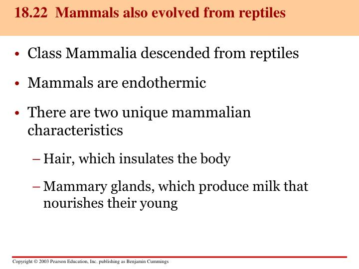 18.22  Mammals also evolved from reptiles
