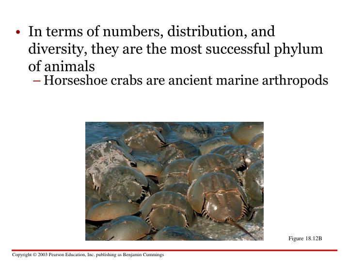 Horseshoe crabs are ancient marine arthropods