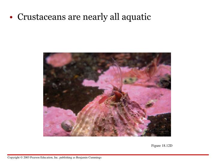Crustaceans are nearly all aquatic