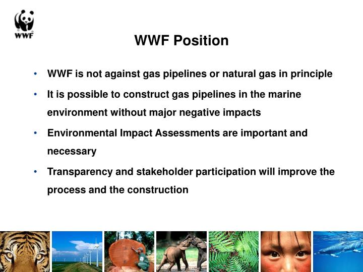 WWF Position