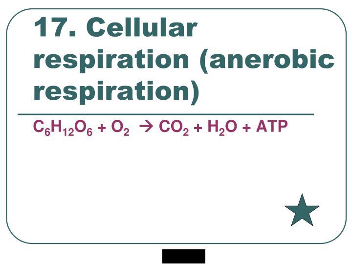 17. Cellular respiration (anerobic respiration)