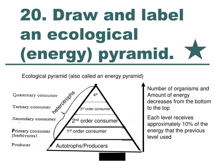 20. Draw and label an ecological (energy) pyramid.
