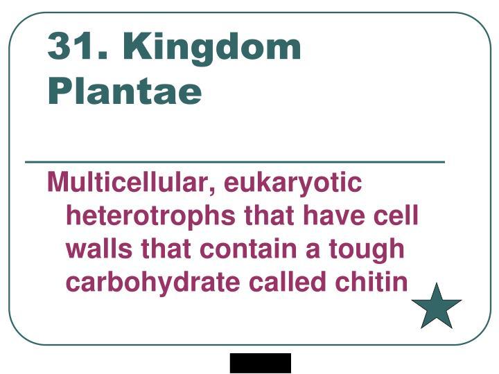 31. Kingdom Plantae