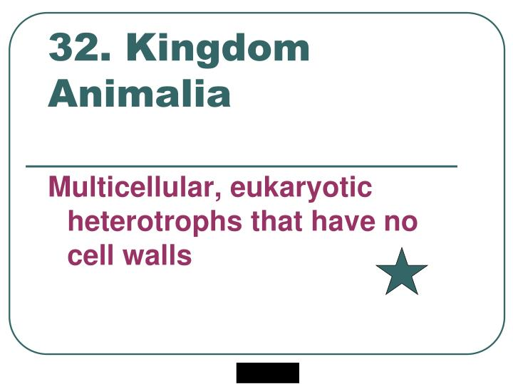 32. Kingdom Animalia