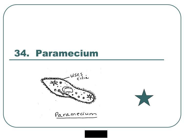 34.  Paramecium