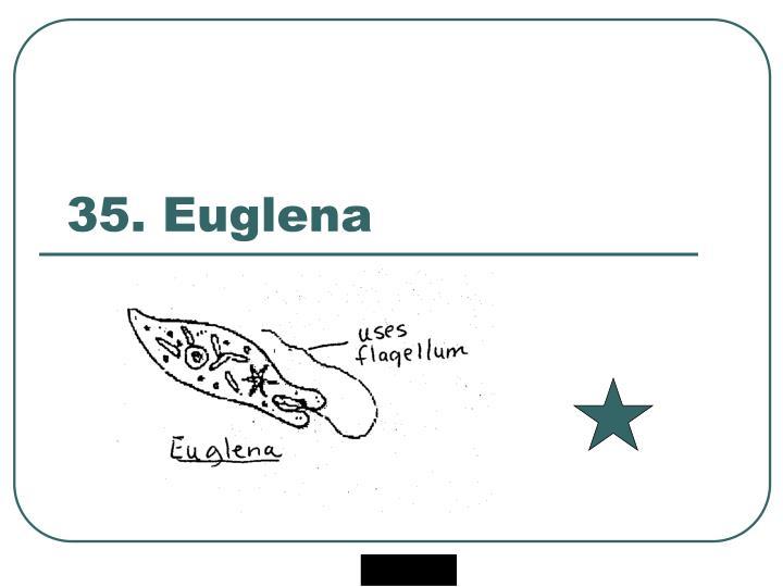 35. Euglena