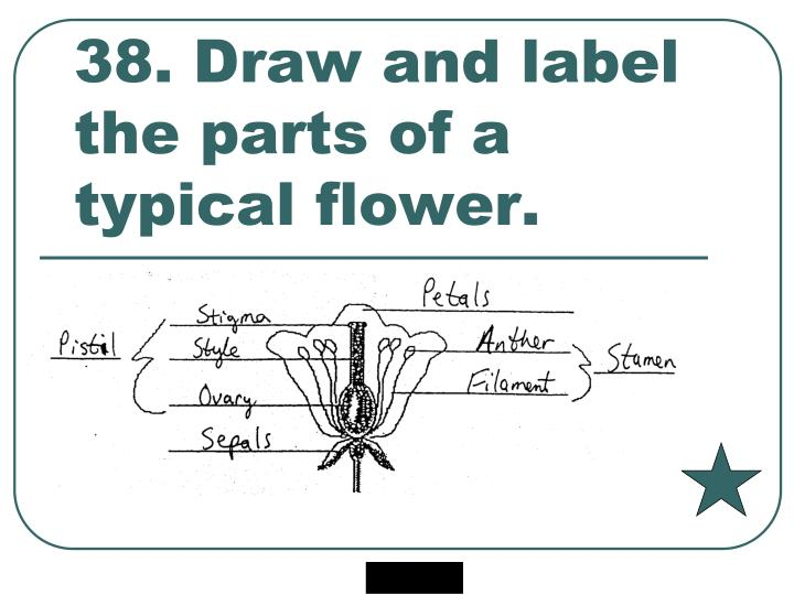38. Draw and label the parts of a typical flower.