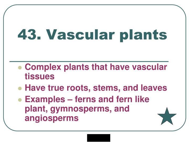 43. Vascular plants
