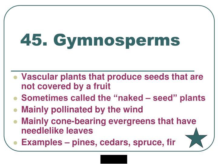 45. Gymnosperms