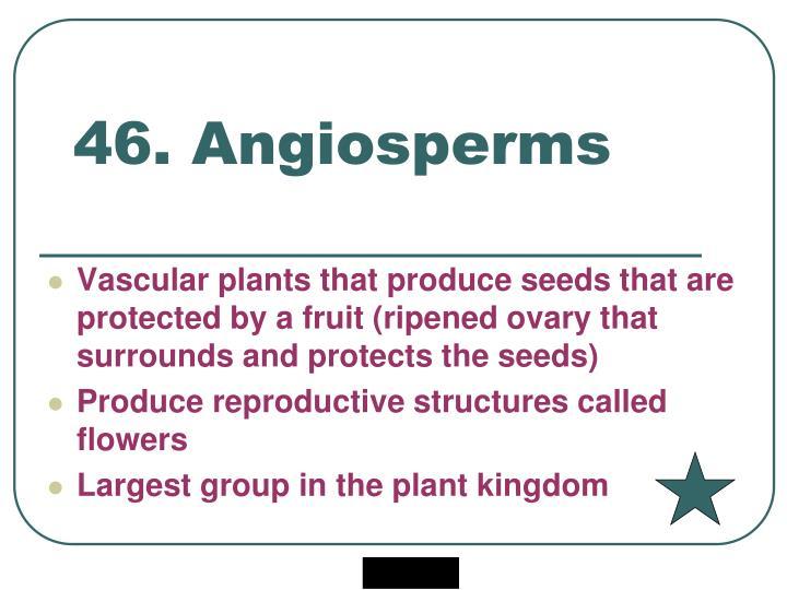 46. Angiosperms