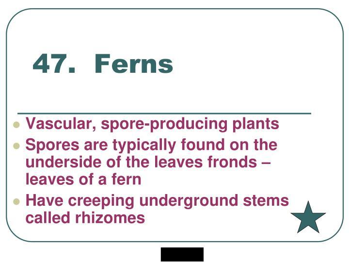 47.  Ferns