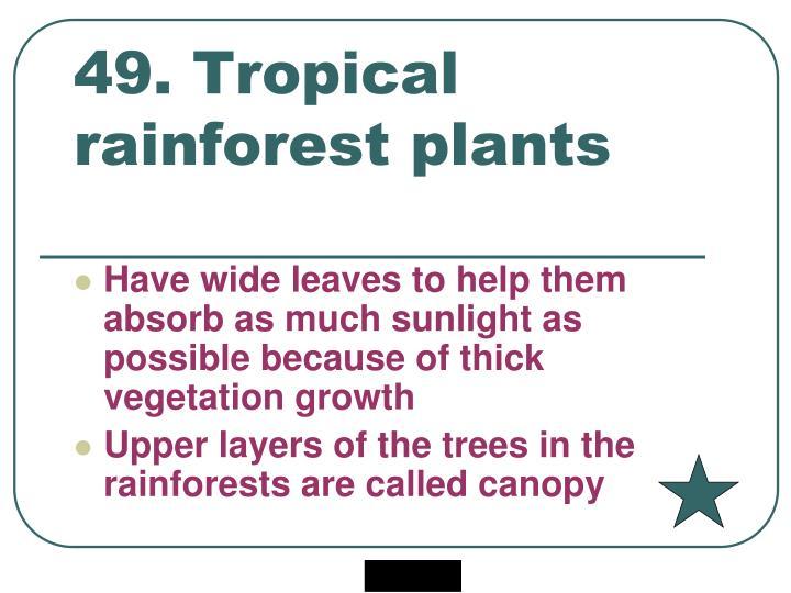 49. Tropical rainforest plants