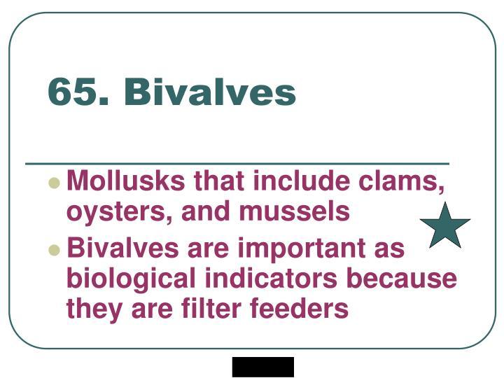 65. Bivalves