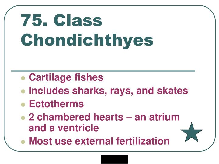 75. Class Chondichthyes