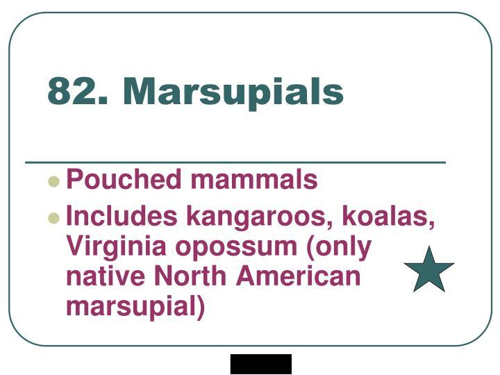 82. Marsupials