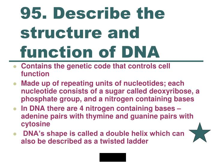 95. Describe the structure and function of DNA