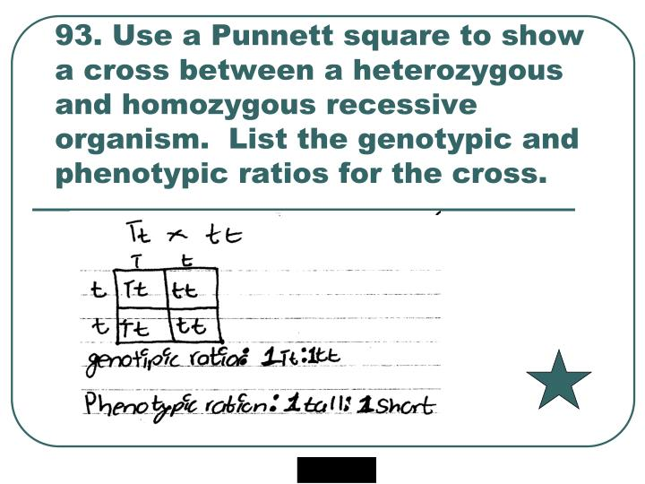 93. Use a Punnett square to show a cross between a heterozygous and homozygous recessive organism.  List the genotypic and phenotypic ratios for the cross.