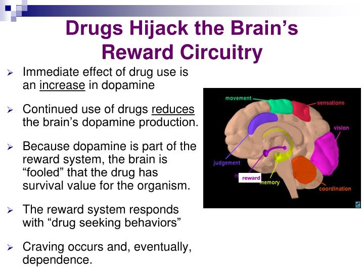 Drugs Hijack the Brain's