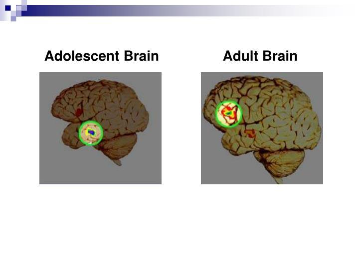 Adolescent Brain