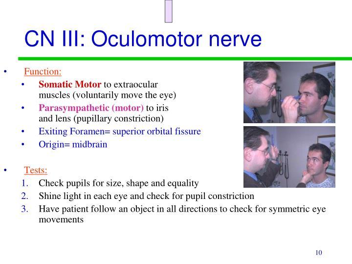 CN III: Oculomotor nerve