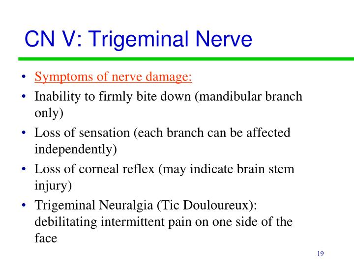 CN V: Trigeminal Nerve