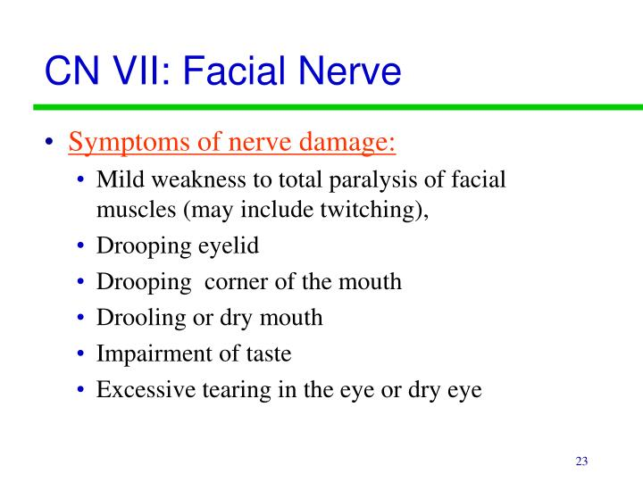 CN VII: Facial Nerve