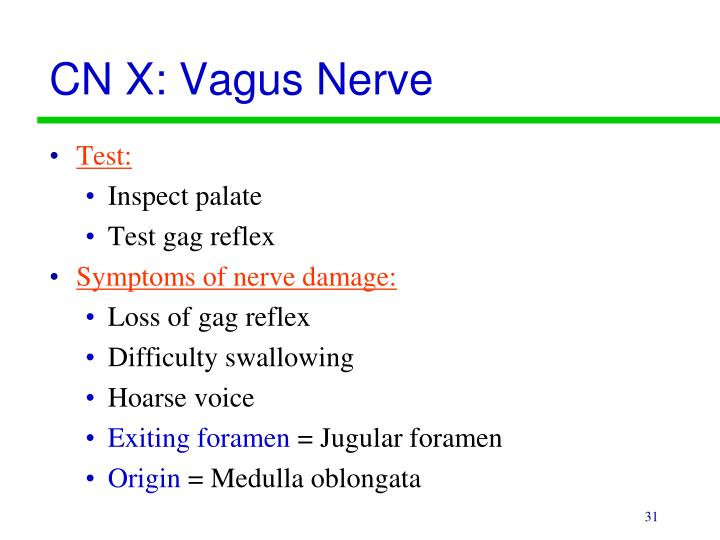 CN X: Vagus Nerve