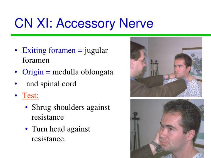 CN XI: Accessory Nerve