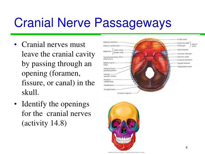 Cranial Nerve Passageways