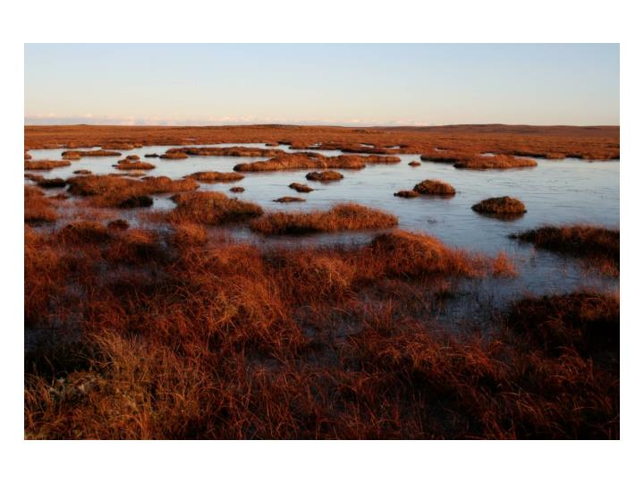 Atlantic Blanket Mire