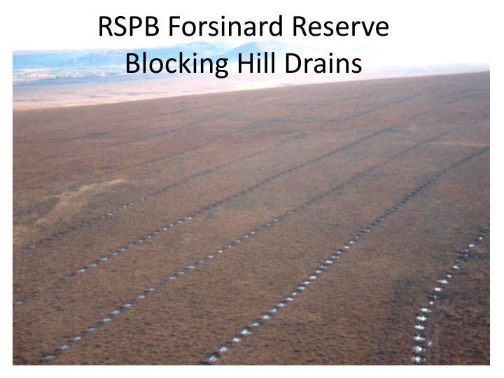 RSPB Forsinard Reserve