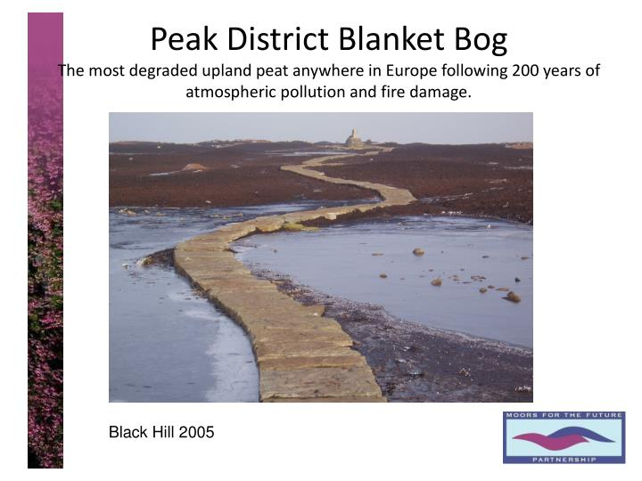 Peak District Blanket Bog