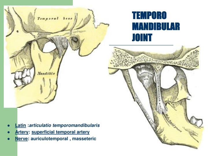 TEMPORO MANDIBULAR JOINT