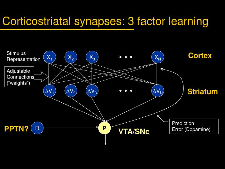 Corticostriatal synapses: 3 factor learning