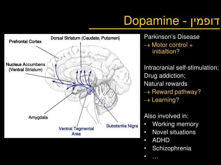 דופמין -