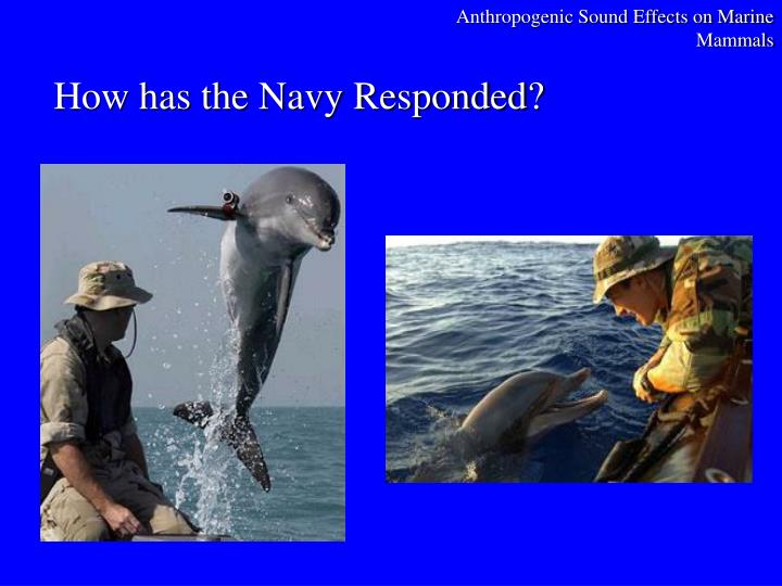 Anthropogenic Sound Effects on Marine Mammals
