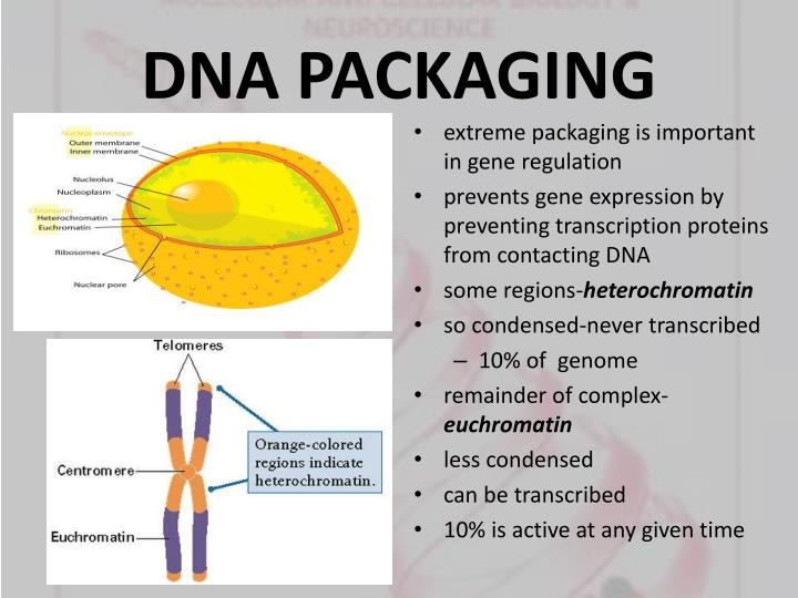 DNA PACKAGING