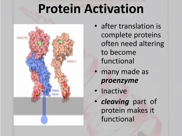 Protein Activation