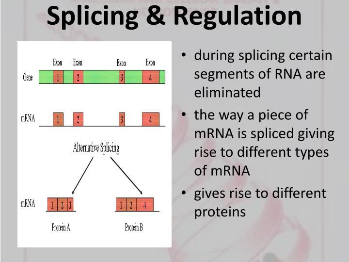 Splicing & Regulation