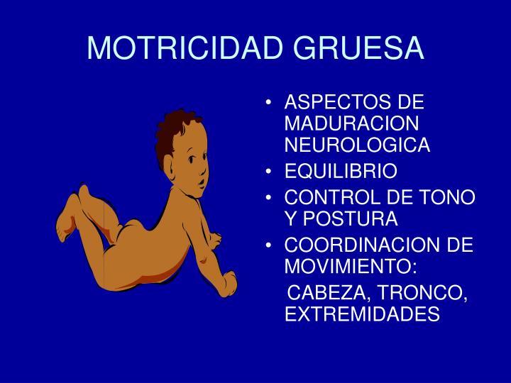 MOTRICIDAD GRUESA
