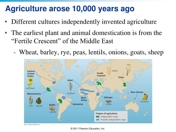 Agriculture arose 10,000 years ago
