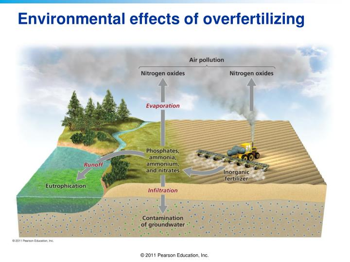 Environmental effects of overfertilizing