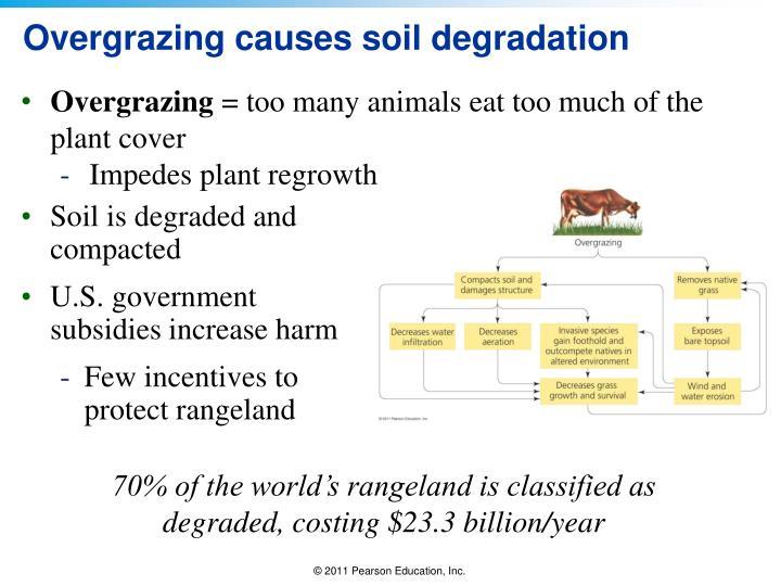 Overgrazing causes soil degradation