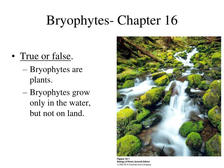 Bryophytes- Chapter 16