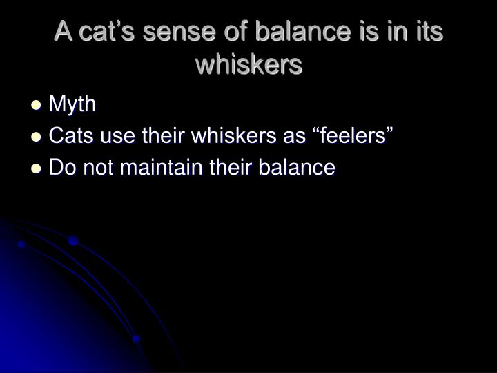 A cat's sense of balance is in its whiskers