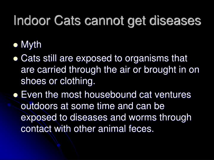 Indoor Cats cannot get diseases