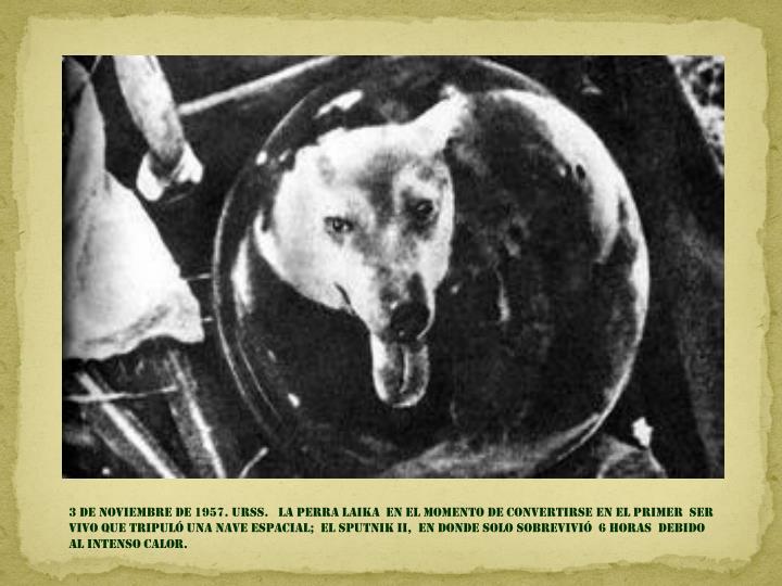 3 DE NOVIEMBRE DE 1957. URSS.   la perra LAIKA  en el MOMENTO DE CONVERTIRSE EN el primer  ser vivo QUE TRIPULÓ UNA NAVE Espacial;  EL SPUTNIK II,  en donde solo sobrevivió  6 horas  DEBIDO AL intenso calor.