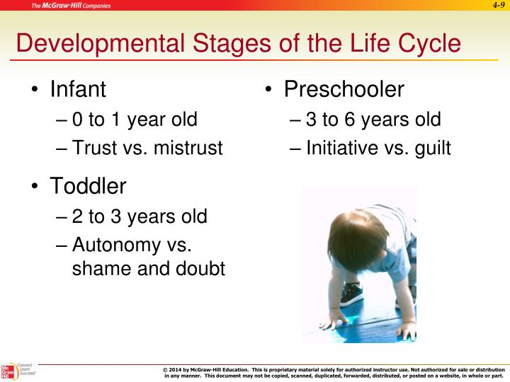 Developmental Stages of the Life Cycle
