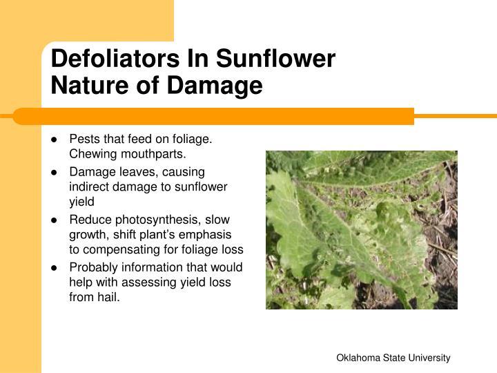 Defoliators In Sunflower